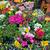 flor · armazenar · retrato · jovem · feminino · florista - foto stock © elnur