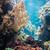 payaso · peces · aislado · blanco - foto stock © elnur