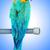 papagaio · pássaro · sessão · natureza · casal · fundo - foto stock © elnur