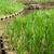 зеленая · трава · садоводства · пруд · святыня · Киото · пейзаж - Сток-фото © elwynn
