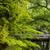 plantas · crescido · esmeralda · verde · bordo · variedade - foto stock © elwynn