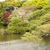 The scenery of Japanese garden with the pone. stock photo © elwynn