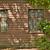 松 · 新しい · 家 · 建設 · 農村 - ストックフォト © elwynn