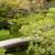 cenário · japonês · jardim · pequeno · pedra · ponte - foto stock © elwynn