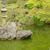 cenário · japonês · jardim · paisagem · folha · rocha - foto stock © elwynn