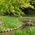 зеленая · трава · садоводства · каменные · пруд · святыня · Киото - Сток-фото © elwynn