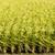 риса · урожай · фермы · Blue · Sky · небе · продовольствие - Сток-фото © elwynn