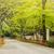 santuário · quioto · árvore · mundo · verão · verde - foto stock © elwynn