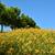 цветок · тигр · Лилия · аннотация · фон · синий - Сток-фото © elwynn