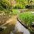 декораций · зеленая · трава · садоводства · пруд · саду · святыня - Сток-фото © elwynn