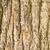 iep · houten · textuur · verweerde · klaar · hout - stockfoto © elwynn