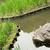 japans · traditioneel · steen · tuin · kyoto · Japan - stockfoto © elwynn