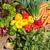 salada · repolho · venda · mercado · comida · saúde - foto stock © elxeneize