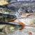 fresh fish on ice for sale stock photo © elxeneize