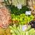 choice of vegetables at a market stock photo © elxeneize