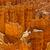 rock spires of bryce national park stock photo © emattil