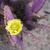 紫色 · 野草 · 開花 · 砂漠 · 砂利 · 自然 - ストックフォト © emattil