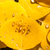 капли · дождь · листьев · Колорадо · воды · природы - Сток-фото © emattil