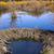 beaver dam stock photo © emattil
