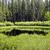 公園 · ヘビ · 川 · 米国 · 森林 · 風景 - ストックフォト © emattil