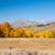 осень · лес · природы · деревья · гор · осень - Сток-фото © emattil