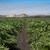 Kaliforniya · alan · dağ · manzara · dağlar · çit - stok fotoğraf © emattil