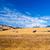 3 ·  · シマウマ · カリフォルニア · 夏 · 日照 · 米国 - ストックフォト © emattil