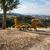 два · Калифорния · вино · стране · Открытый · дерево - Сток-фото © emattil