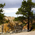 uprooted tree at bryce canyon stock photo © emattil