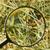 干し草の山 · 針 · 虫眼鏡 · 光 · ガラス - ストックフォト © emese73