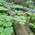 公園 · 豊かな · 緑 · 冷たい · 雨林 · カナダ - ストックフォト © emiddelkoop
