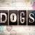sujo · cães · cinco · lamacento · inglês · cão - foto stock © enterlinedesign