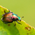 japanese beetle popillia japonica on leaf stock photo © enterlinedesign