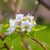 virágzó · gyümölcsfa · tavasz · virágok · kék · ég · égbolt - stock fotó © enterlinedesign