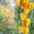 Sturm · Herbstlaub · Frau · Hand · Augen · Natur - stock foto © epitavi