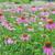 büyük · kenevir · bitkiler · çiçek · çim · yaprakları - stok fotoğraf © epitavi