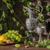 виноград · вино · кувшин · темно - Сток-фото © epitavi