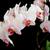 beyaz · orkide · siyah · şube · orkide · çiçek - stok fotoğraf © Epitavi