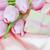 ピンク · チューリップ · 花 · 花束 · ギフトボックス · 新鮮な - ストックフォト © epitavi