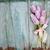 Pink tulips on the blue wooden background stock photo © Epitavi