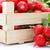 macro · vers · Rood · radijs · plantaardige - stockfoto © erierika