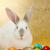 Bunny · пасхальных · яиц · окрашенный · деревенский · Пасху - Сток-фото © erierika