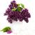 verano · lila · flores · jarrón · flor - foto stock © es75