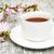 japán · zöld · tea · sakura · ág · bambusz · asztal - stock fotó © es75