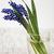 florescimento · flor · jacinto · pote · decorado · musgo - foto stock © es75