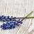 Blauw · hyacint · vaas · lentebloemen · witte · vintage - stockfoto © es75