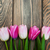 border with pink tulips stock photo © es75