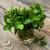 friss · menta · fehér · váza · desszertek · fából · készült - stock fotó © es75