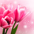 çiçekler · lale · bokeh · bahçe · güzellik · yaz - stok fotoğraf © es75