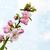 flor · cereza · grunge · azul · cuadrados - foto stock © es75